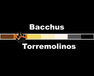 Bacchus Bear Bar<br>Torremolinos, Spain